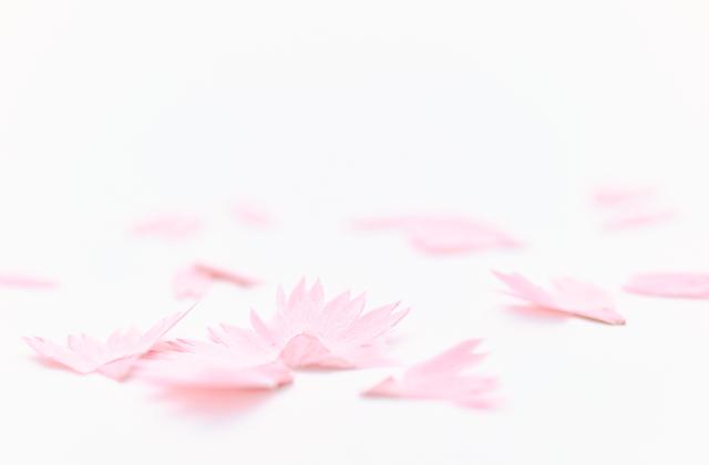 bút chì hoa hình 2