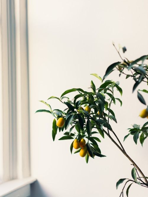 Cây trồng trong nhà-2