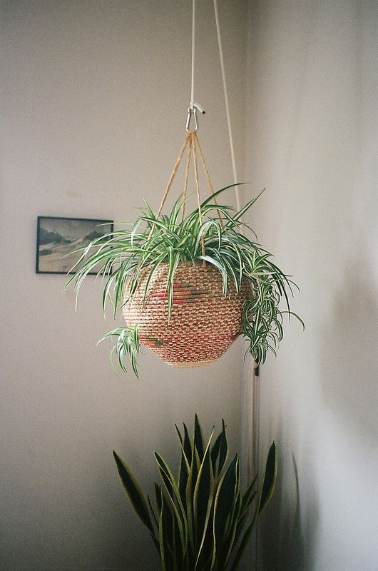 Cây trồng trong nhà-8