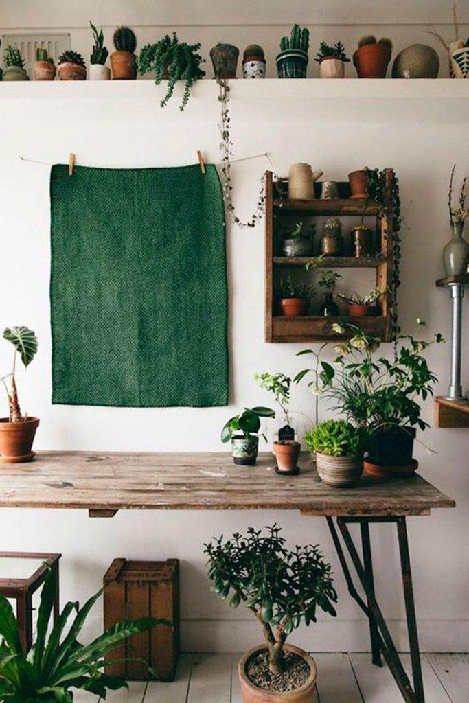 cây cảnh trong nhà-ốc đảo xanh elledecoration vn 4