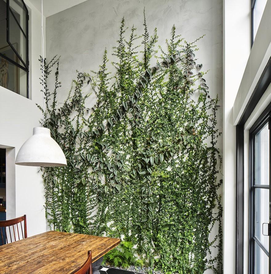 cây cảnh trong nhà-ốc đảo xanh elledecoration vn 5