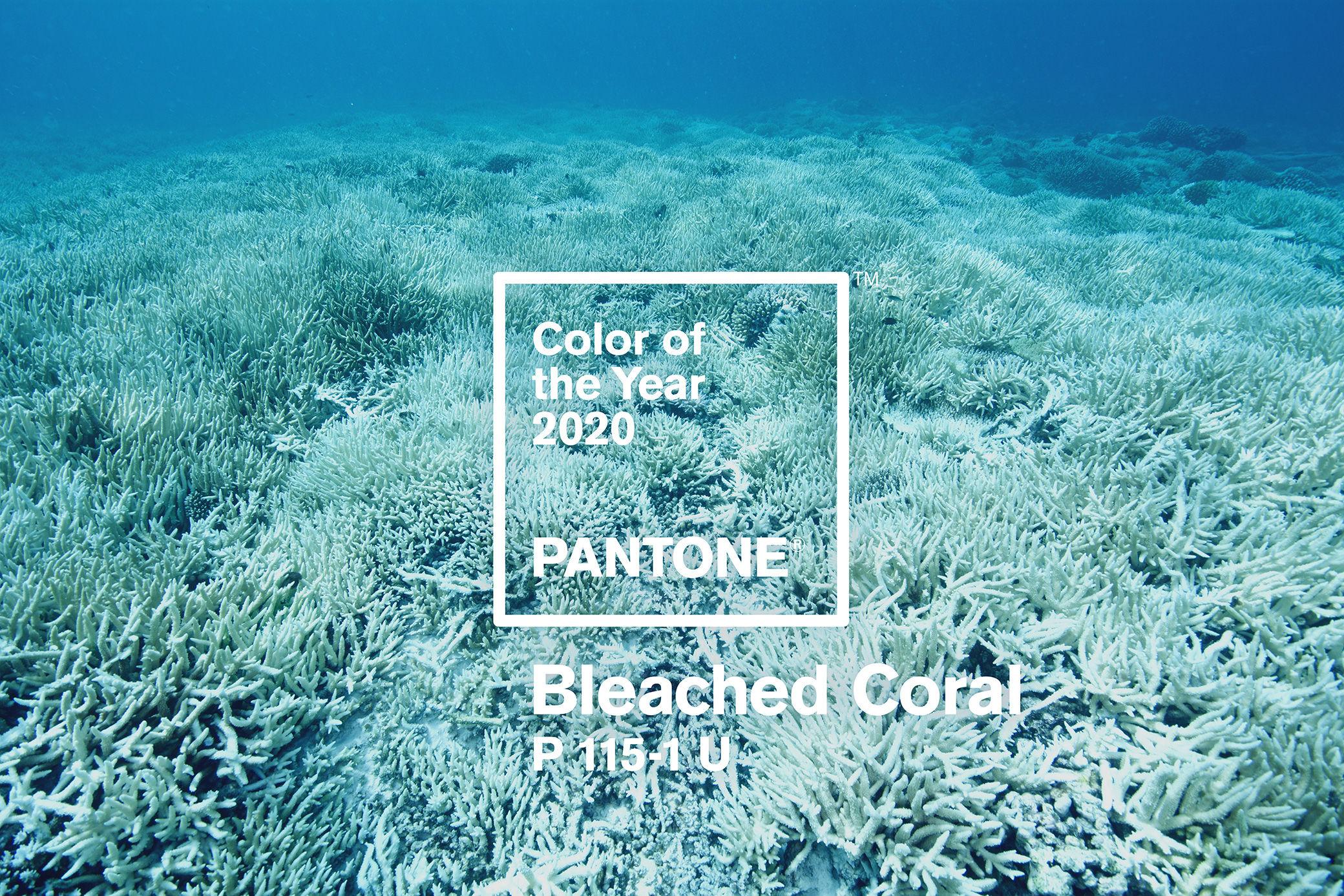 jack-huei pantone 2020 bleached coral elledecoration vn