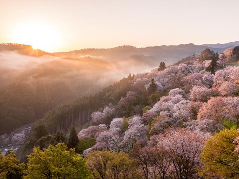 10 nơi thưởng hoa đáng đến nhất trên thế giới