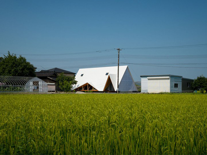 Ngôi nhà Hara - Túp lều gỗ khổng lồ
