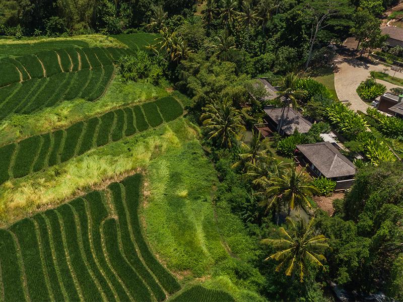 Khu nghỉ dưỡng Nirjhara - Tìm về đồng quê xanh ngát
